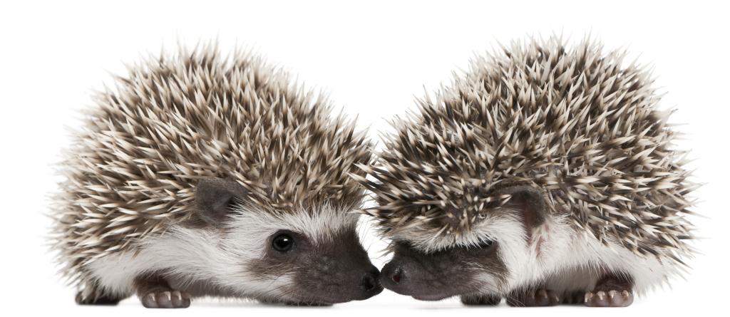 REVIEW: How Do Porcupines Make Out - A Relationship Blog